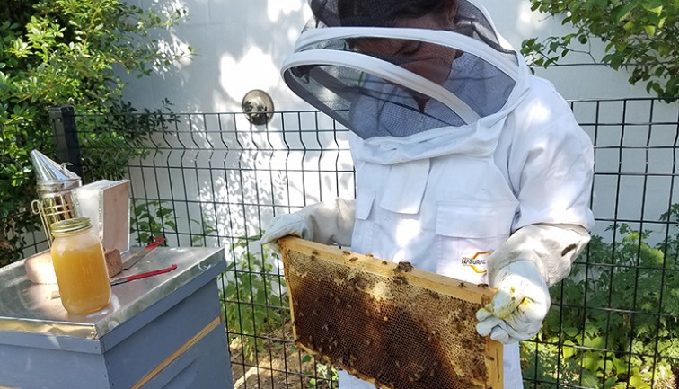 Students work with bee hive